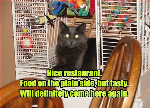 review,restaurant,food,noms,Cats
