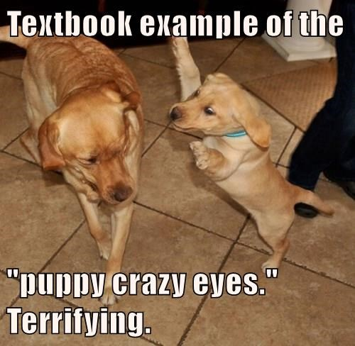 """Textbook example of the   """"puppy crazy eyes.""""                  Terrifying."""