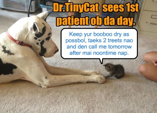 patient,dogs,doctor,kitten,great dane,Cats,dr tinycat