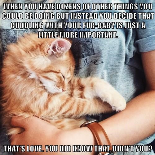 WHEN YOU HAVE DOZENS OF OTHER THINGS YOU COULD BE DOING BUT INSTEAD YOU DECIDE THAT CUDDLING WITH YOUR FUR-BABY IS JUST A LITTLE MORE IMPORTANT.  THAT'S LOVE. YOU DID KNOW THAT, DIDN'T YOU?