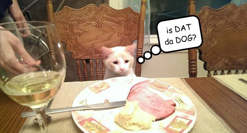 ham,dinner,noms,Cats,meat