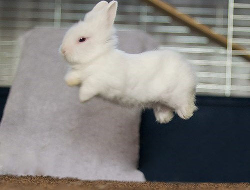 I Must Go, Bunday Needs Me