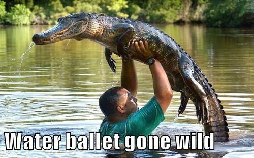 Water ballet gone wild