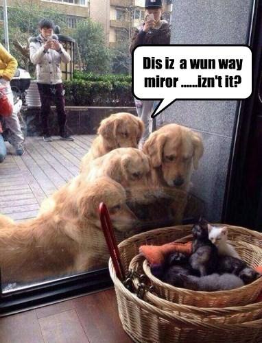 Dis iz  a wun way miror ......izn't it?