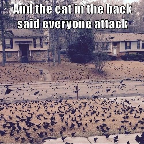 And the cat in the back said everyone attack