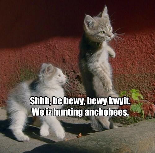 The Great Anchobee Hunt is Underway