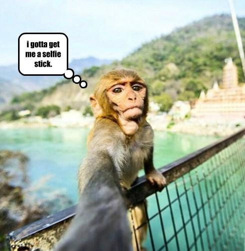 picture,monkey,selfie
