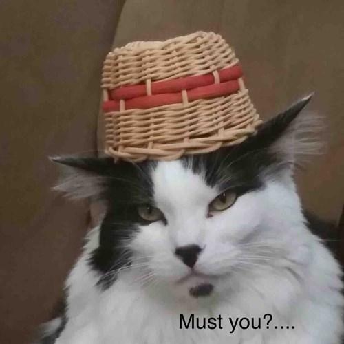 Hat on cat