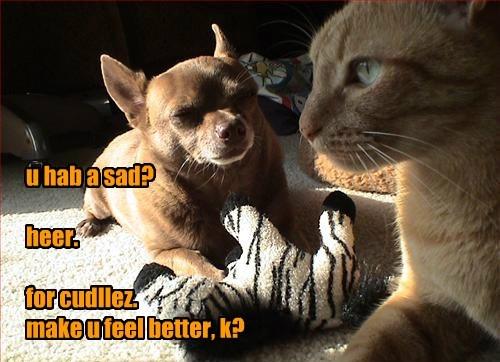 Sad,dogs,stuffed animal,cuddle,BFFs,Cats