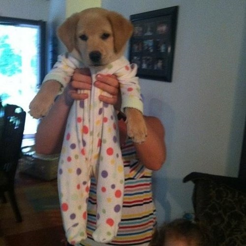 heres-a-puppy-in-a-onesie-for-your-monday