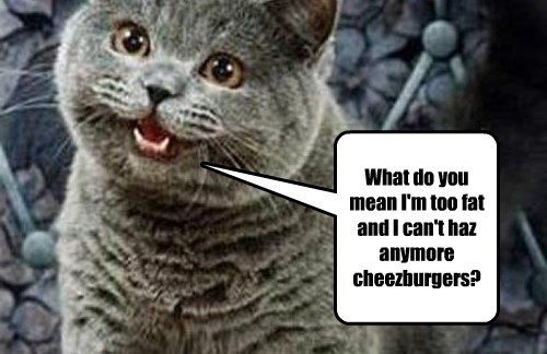 What do you mean I'm too fat and I can't haz anymore cheezburgers?