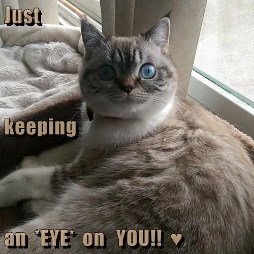 Just keeping an  *EYE*  on   YOU!!  ♥