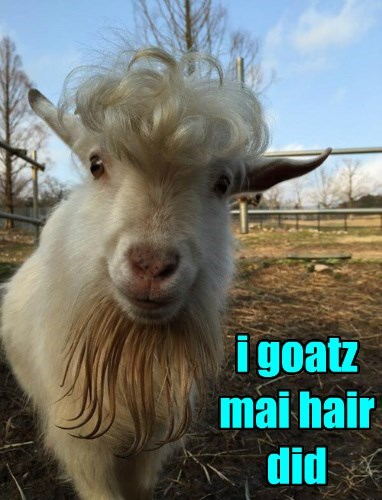 hair,curly,goats,puns,nice,style