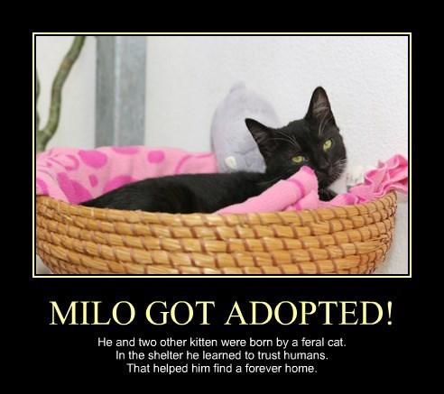 MILO GOT ADOPTED!