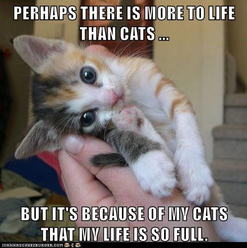 life,kitten,love,Cats