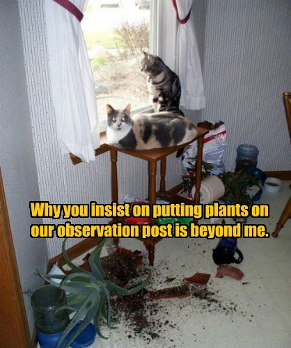 plants,why destruction,why,Cats