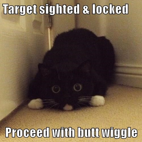 butt,wiggle,attack,target acquired,Cats,black cat