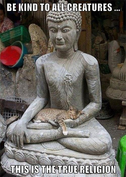 BE KIND TO ALL CREATURES ...  THIS IS THE TRUE RELIGION