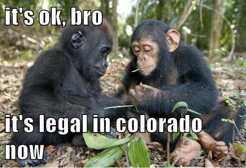it's ok, bro  it's legal in colorado now