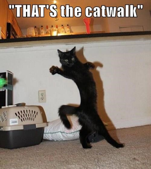"""THAT'S the catwalk"""