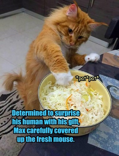 Determined to surprise  his human with his gift,  Max carefully covered  up the fresh mouse.