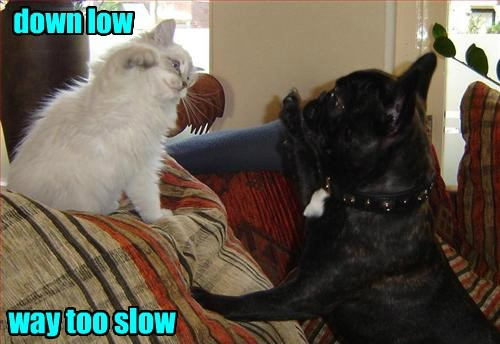 dogs,slow,high five,Cats