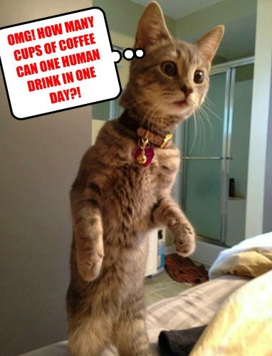 OMG! HOW MANY CUPS OF COFFEE CAN ONE HUMAN DRINK IN ONE DAY?!