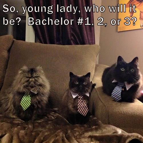 So, young lady, who will it be?  Bachelor #1, 2, or 3?