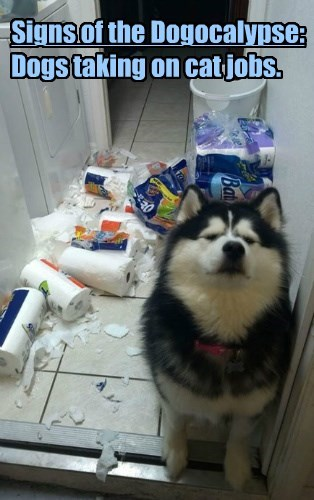 Signs of the Dogocalypse: