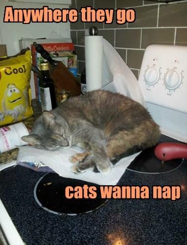 Anywhere they go                                cats wanna nap