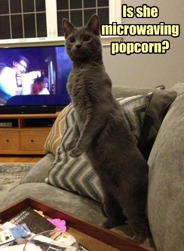 I'll put the movie on pause
