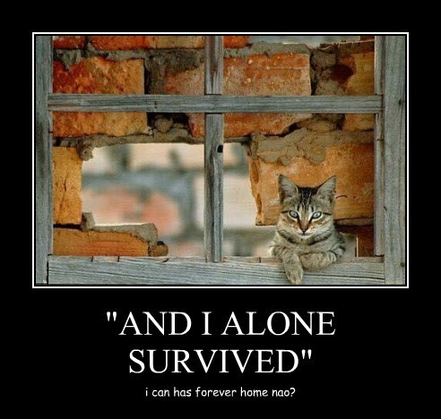 """""""AND I ALONE SURVIVED"""""""