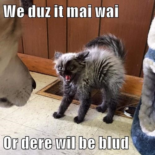 We duz it mai wai  Or dere wil be blud