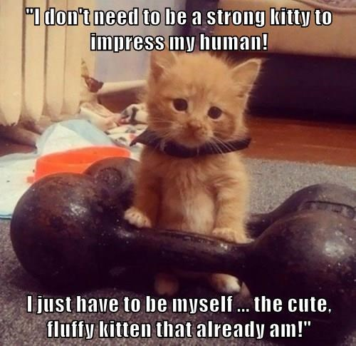 """I don't need to be a strong kitty to impress my human!  I just have to be myself ... the cute, fluffy kitten that already am!"""