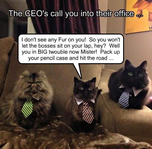 Kitty CEO's mad at you!