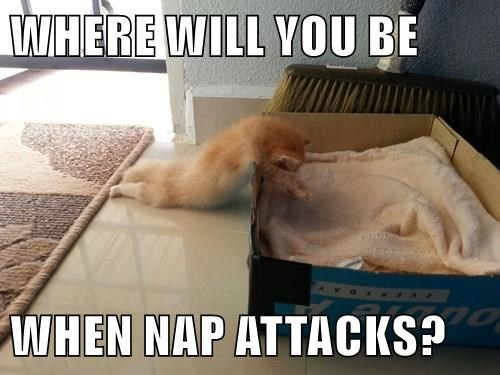 WHERE WILL YOU BE  WHEN NAP ATTACKS?