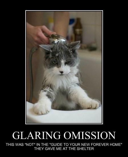GLARING OMISSION