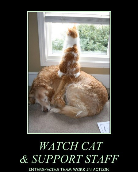 WATCH CAT & SUPPORT STAFF