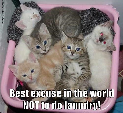 Best excuse in the world NOT to do laundry!