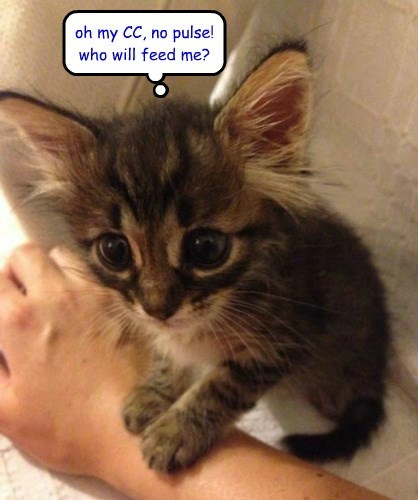 wrong side, kitteh!