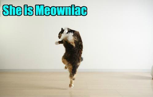 Flash Dance Kitteh