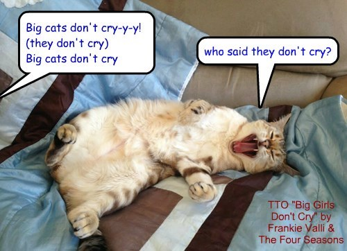 """Drama Queen Kitteh"" (TTO ""Big Girls Don't Cry"" by Frankie Valli & The Four Seasons)"