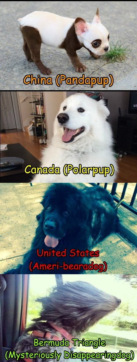 Beardogs from around the world