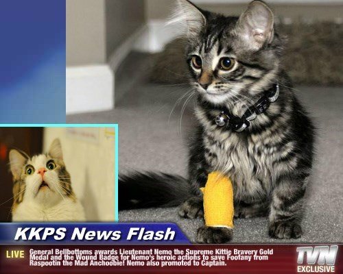 KKPS News Flash - General Bellbottoms awards Lieutenant Nemo the Supreme Kittie Bravery Gold Medal and the Wound Badge for Nemo's heroic actions to save Foofany from Raspootin the Mad Anchoobie! Nemo also promoted to Captain.
