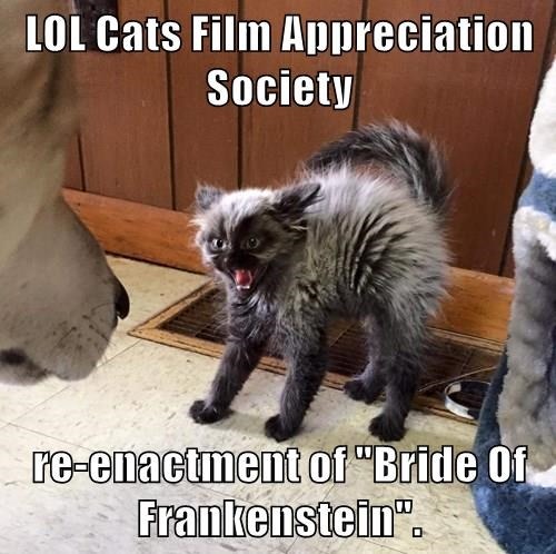 "LOL Cats Film Appreciation Society  re-enactment of ""Bride Of Frankenstein""."