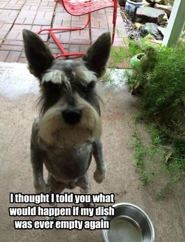 warning,dogs,schnauzer,angry,food