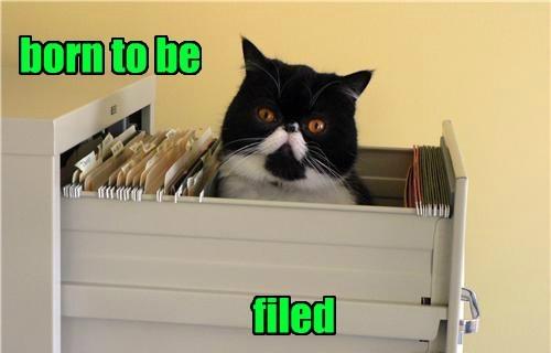 puns,if i fits i sits,Cats,business