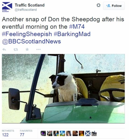 funny-news-fail-tractor-dog-scotland
