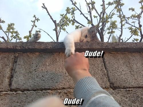 Dude! Dude!