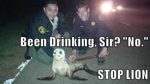 """Been Drinking, Sir? """"No."""" STOP LION"""